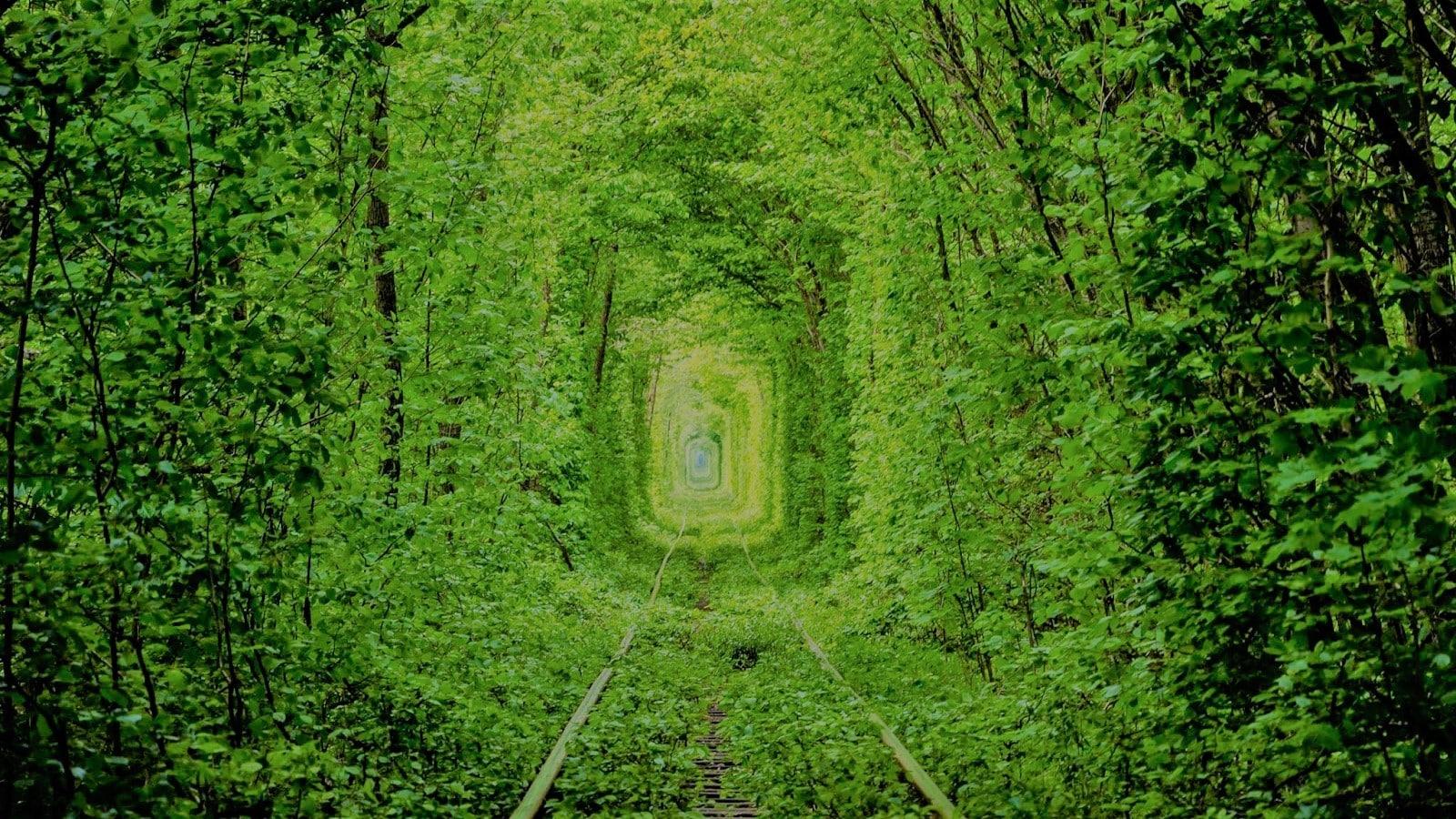 зелений тунель в формі арки